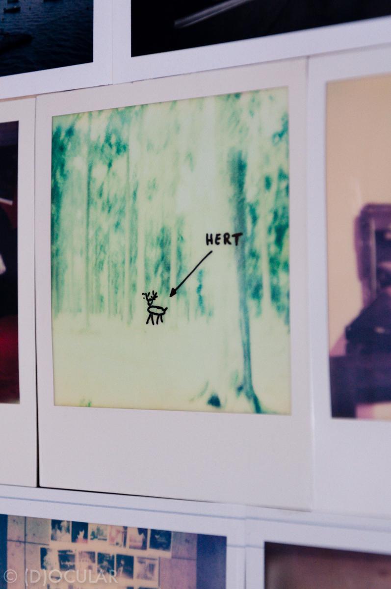 hert polaroid