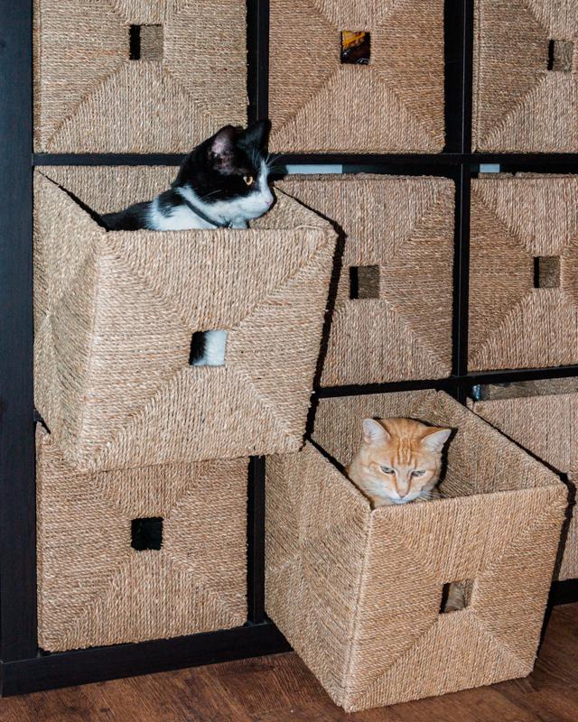 cat organizer gerhildemaakt.wordpress.com
