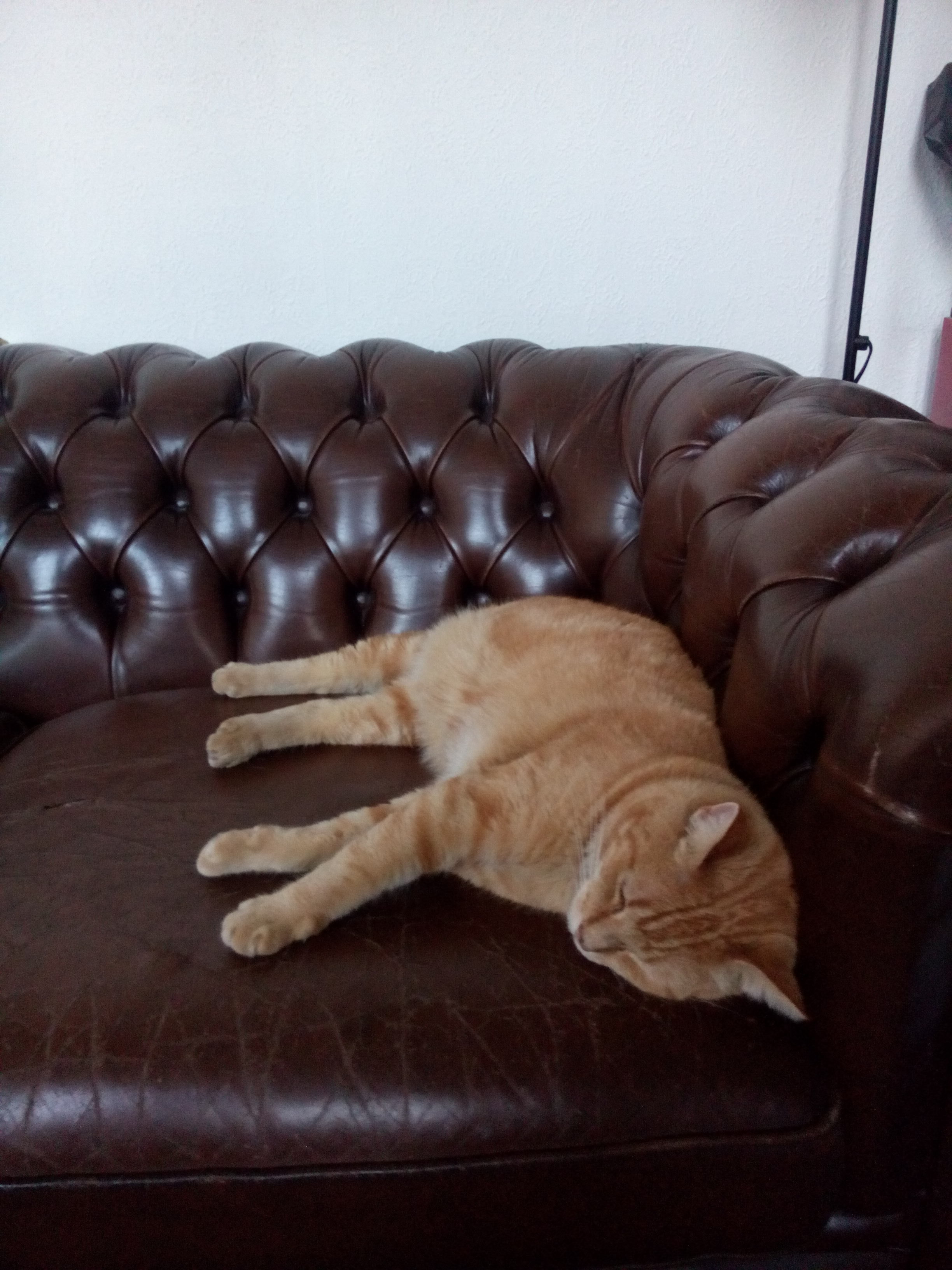 Hobbes Chesterfield http://gerhildemaakt.wordpress.com