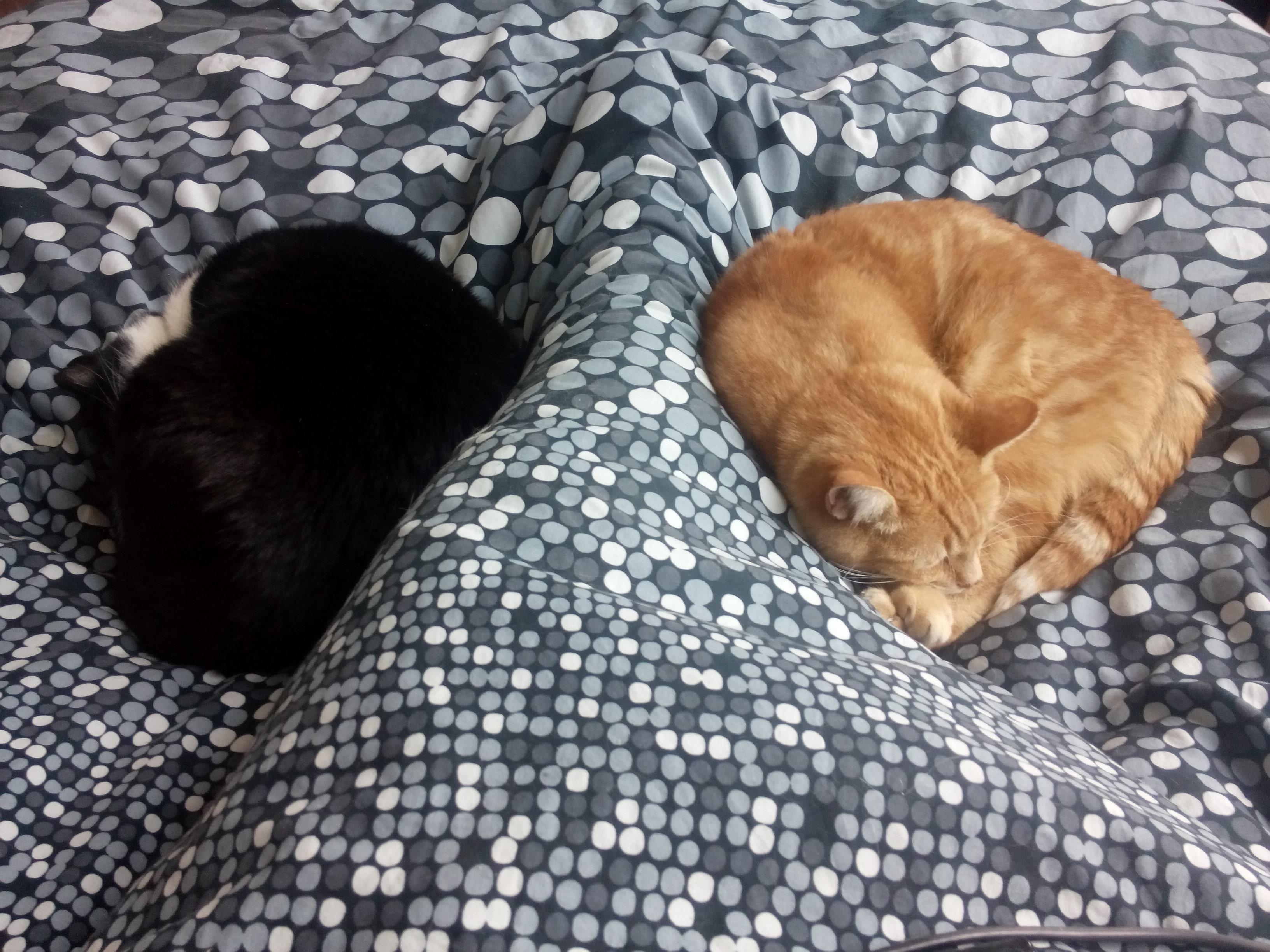 Jip en Hobbes