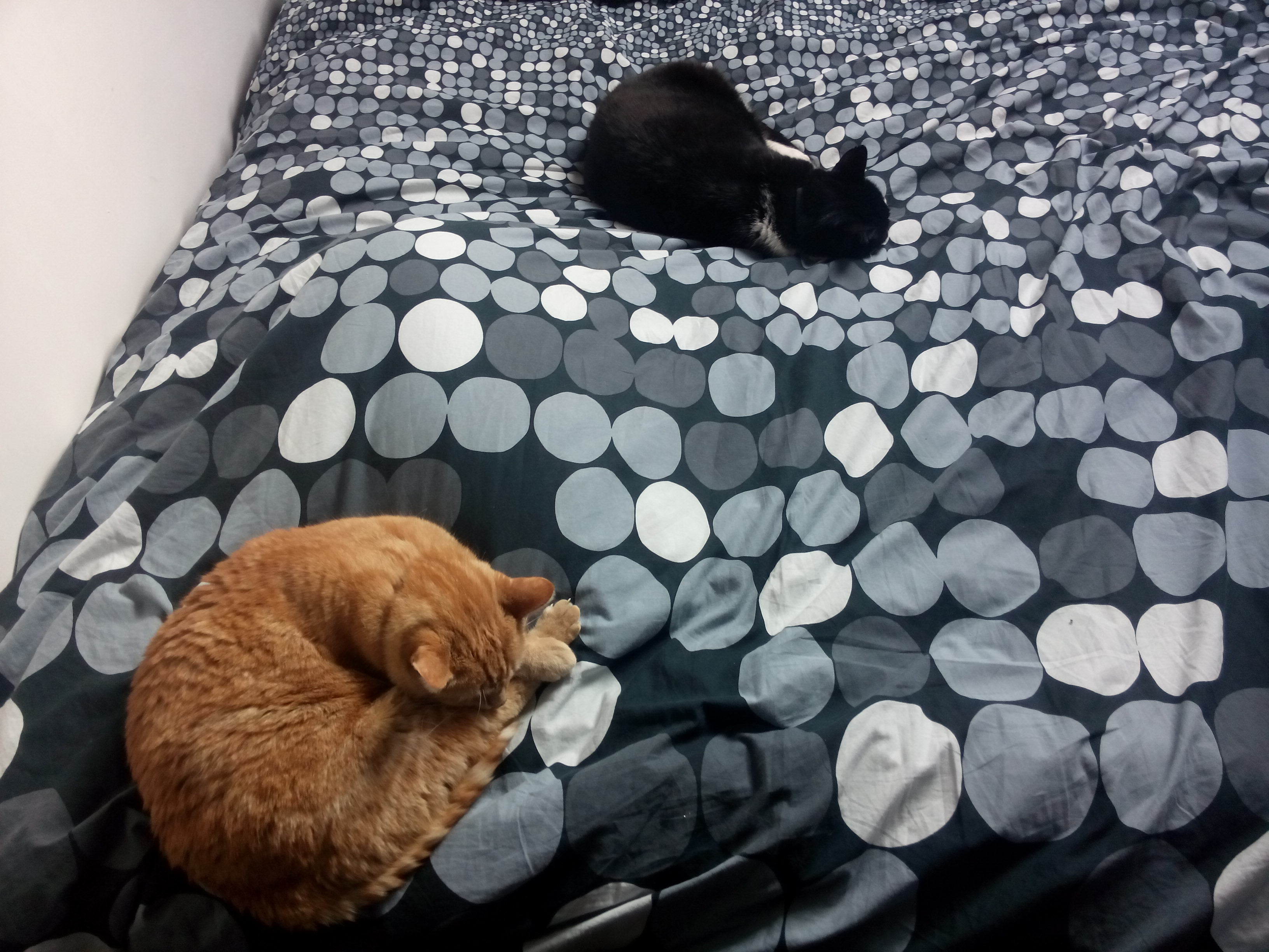 Het leven zoals het is ... verbouwingen katten op bed