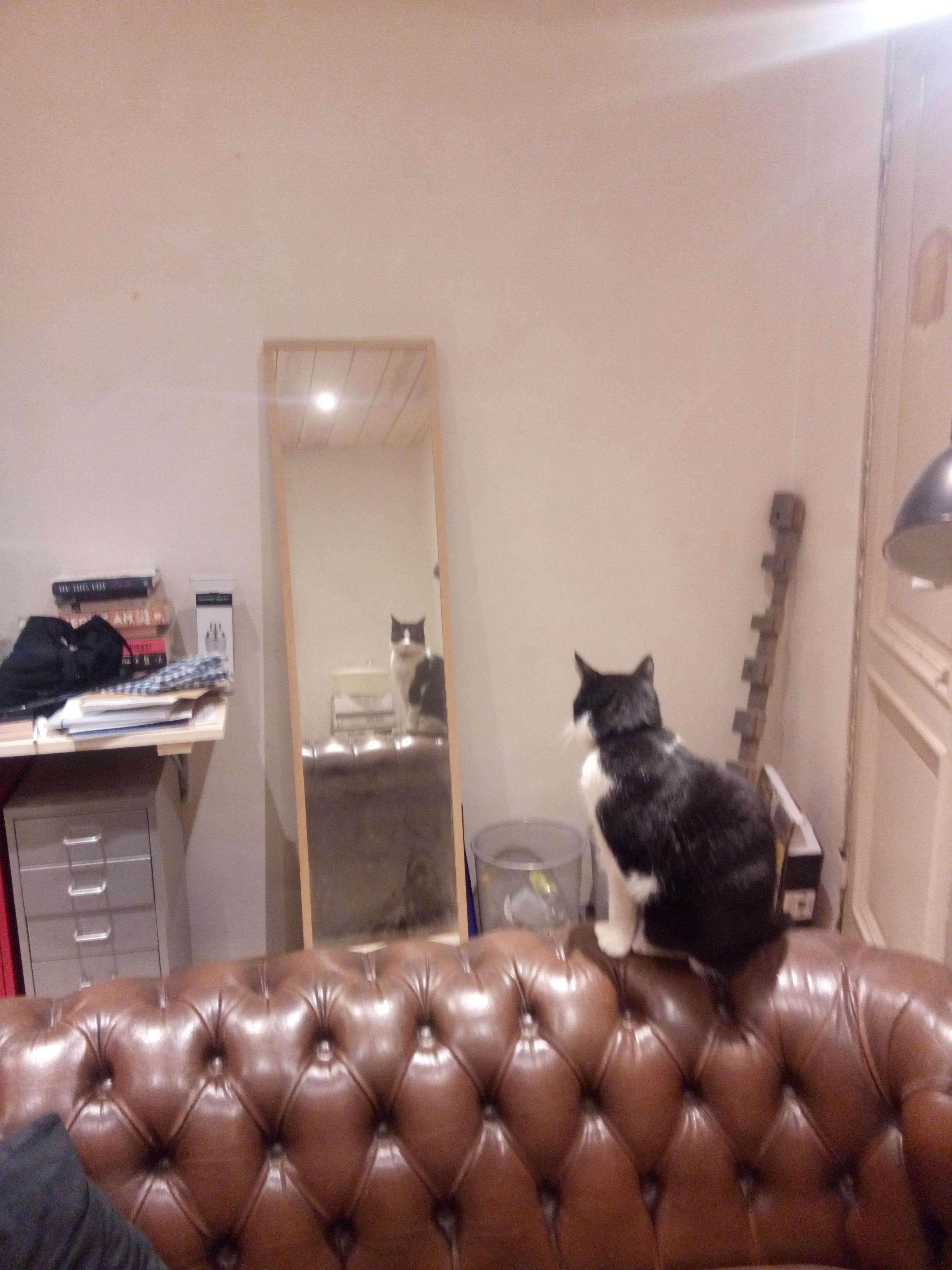 Jip in spiegel