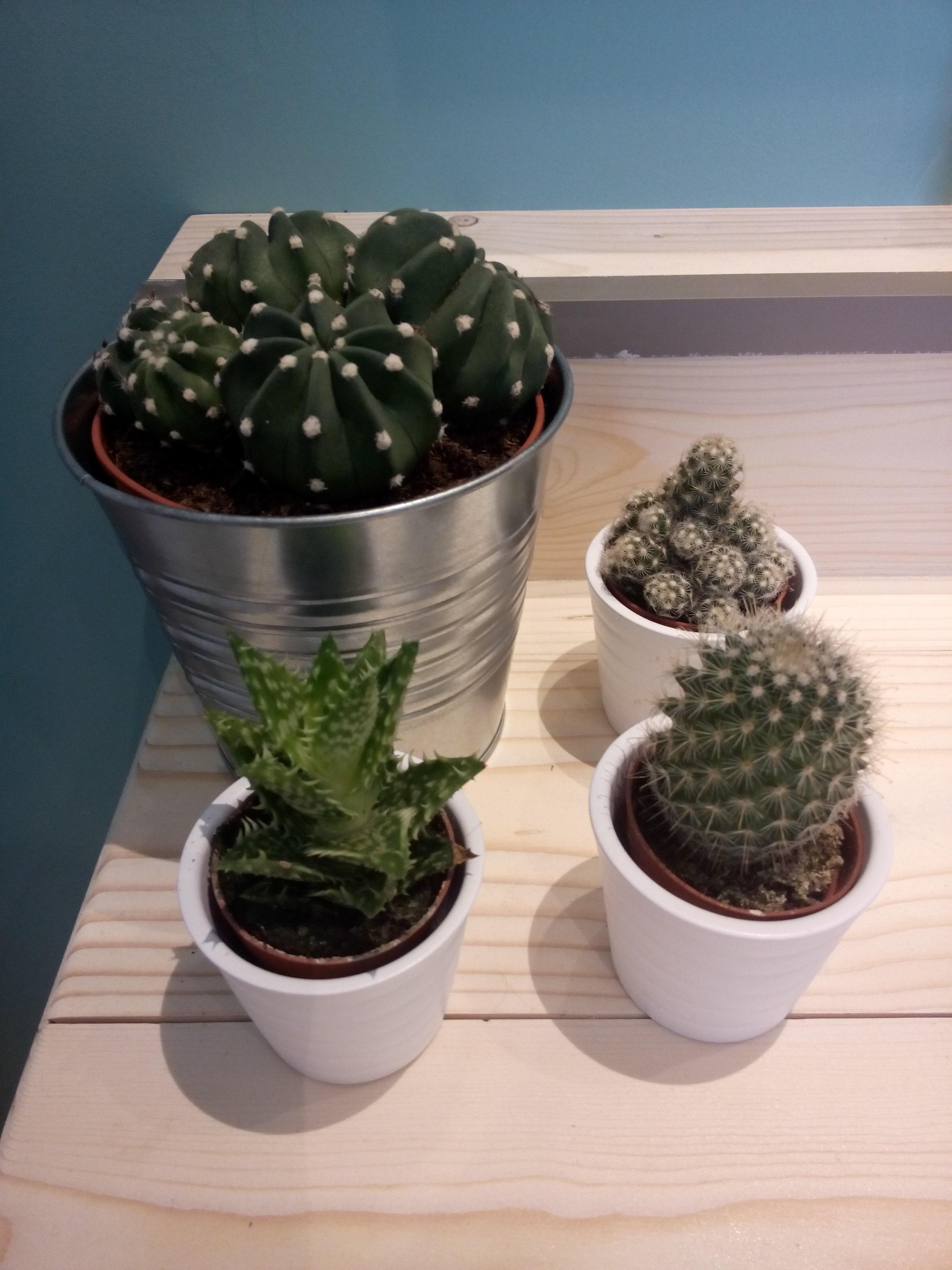 cactus badkamer