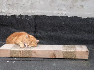 Hobbes krabpaal slapen