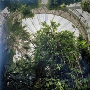 portra400007-min docular Kopenhagen botanische tuin